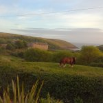 Photo of Manorbier Bed and Breakfast