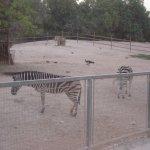 Photo de Doha Zoo