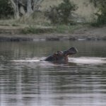 Honeyguide Tented Safari Camps Photo
