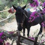 Photo of Ibiza Horse Valley
