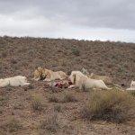 Photo de Sanbona Wildlife Reserve