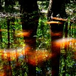 Reflections of Congaree Swamp