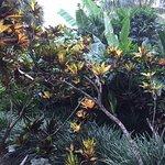 Wakulla Suites - Tropical Garden