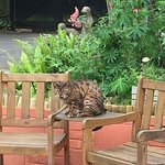Geoffrey the local cat who visits