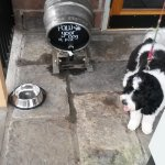 Great country pub for dogs