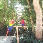 Foto de Scape Park at Cap Cana