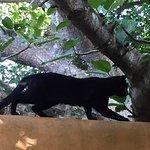 Photo de Kwalucia Private Safari Retreat