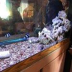 Nice Fish Tank at Entrance
