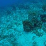 Photo of Dive Paradise Cozumel