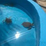 Photo of Sea Turtle Hatchery