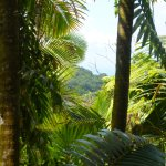 A mountain view from a trail in the El Yunque rainforest.
