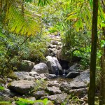 A view of streams and rocks in the El Yunque rainforest.