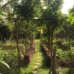 Organic Farm Garden