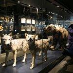 Flora und Fauna des Ruhrgebiets in der Dauerausstellung