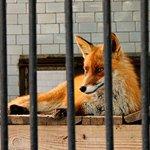 Photo of Nikolaev Zoo