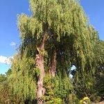 spousta rostlinek, keřů a stromů - paráda