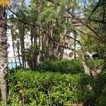 Photo of PrimaSol Cala d'Or Gardens