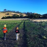 Exploring the farm on a sunny Winter's morning.