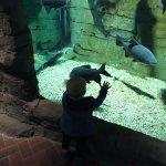 Photo of St Andrews Aquarium