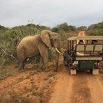 Inquisitive elephants