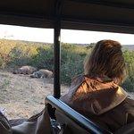 Sleepy hippos!