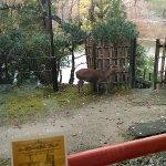 Photo of Nara Hotel