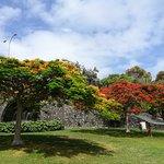 Doramas Park Foto
