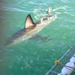 Great White Shark Tours Foto
