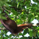 Photo of Borneo Dream Travel & Tours