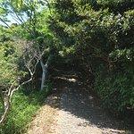 Photo de Mt. Yokoyama Observation Deck
