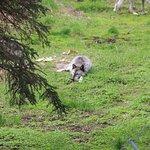 Foto di Alaska Zoo