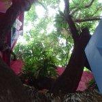 Photo of Casa Rosa
