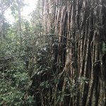 Photo of Curtain Fig National Park