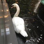Photo de Embassy Suites by Hilton Austin Arboretum