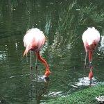 Flamingos at the resort entrance.