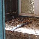 vu de la chambre sur un nid de pigeon fiente et mégots