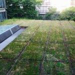 Roof top garden?
