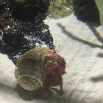 Lanzarote Aquarium Foto
