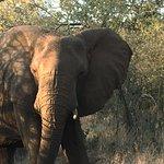 Amakhosi Safari Lodge Foto