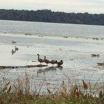 Waterfowl at Dyke Marsh Wildlife Preserve