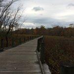 Boardwalk at Dyke Marsh Wildlife Preserve