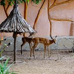 Satao Luxury Tented Camp Foto