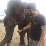 Such a well looked after happy elephant
