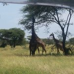 Photo de Serengeti Simba Lodge