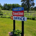 Field of Lupines at Exit 41 Travel Inn