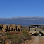 Game Drives at Sanbona Wildlife Reserve