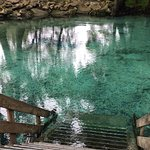 Ginnie Springs Foto