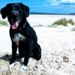 Perfect dog walking beach