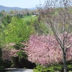 Olde Beau Spring