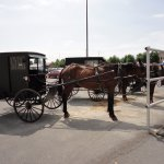 Horse & Buggies parked at Shady Maple